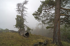 Dense fog in a mountain forest. Caucasus. Royalty Free Stock Photo