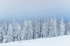 Dense fog in the mountains. Dramatic scene. Magical winter snow Royalty Free Stock Photo