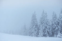 Dense fog in the mountains. Dramatic scene. Magical winter snow Royalty Free Stock Photos
