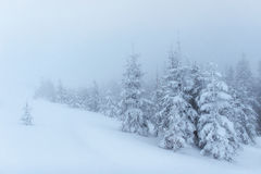 Dense fog in the mountains. Dramatic scene. Magical winter snow Stock Image