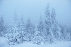 Dense fog in the mountains. Dramatic scene. Magical winter snow Royalty Free Stock Images