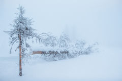 Dense fog in the mountains. Dramatic scene. Magical winter snow Stock Images
