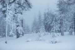 Dense fog in the mountains. Dramatic scene. Magical winter snow Stock Photography