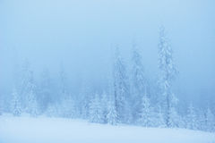 Dense fog in the mountains. Dramatic scene. Magical winter snow Royalty Free Stock Photography