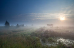 Dense fog over marsh at sunrise Royalty Free Stock Photography