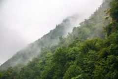 Dense fog over the trees. Fog in the forest, mountains Royalty Free Stock Images