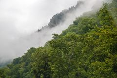 Dense fog over the trees. Fog in the forest, mountains Stock Images
