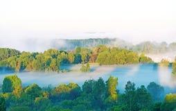 Dense fog over the wood Stock Photo