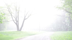 Dense fog park tree car. Dense early morning fog in park and car driving on small road between green trees. Car front window windscreen view in early morning stock video footage