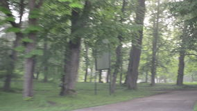 Dense fog park tree car. Dense early morning fog in park and car driving on small road between trees stock video