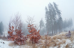 Dense fog in winter mountains Stock Image