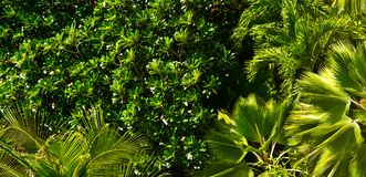 Dense foliage Royalty Free Stock Photography