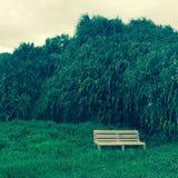 Dense Foliage of Maui Hawaii Stock Images