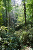 Dense forest. With trees and bushes Royalty Free Stock Photos
