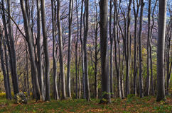 Dense forest at Homolje mountains on a sunny autumn day Royalty Free Stock Images