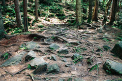 Dense forest in the mountains Stock Photography