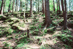Dense forest in the mountains Stock Photos