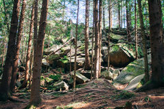 Dense forest in the mountains Stock Images