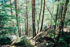 Dense forest in the mountains Royalty Free Stock Photography