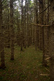Dense Forest in Prince Edward Island Stock Photo