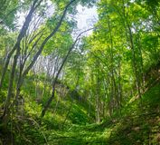 Dense forest in ravine between the hills in central Russia. Royalty Free Stock Image