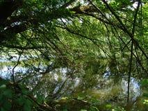 Dense forest by the river. Autumn, beauty, europe, serbia, serbian, sky, puddle, swamp, Ardea, Carska bara, Stari Begej, Ecka, Vojvodina, 2014 Stock Images