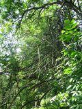 Dense forest by the river. Rngreen, wood, leaf, flap, butt, plaice, Vojvodina, Serbia, Europe Royalty Free Stock Photo