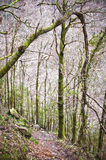 Dense forest Royalty Free Stock Photos