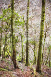 Dense forest Royalty Free Stock Photography
