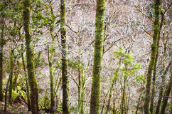 Dense forest Royalty Free Stock Photo
