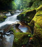 Dense Forest Waterfall stock photo