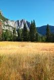 Dense  grass in national park in California. Royalty Free Stock Photos