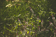 Dense grasses and flowers in vintage tone Royalty Free Stock Photo