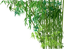 Dense green bamboo forest on white background Royalty Free Stock Photos