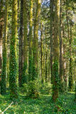Dense green forest Stock Photo