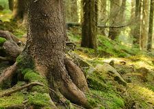 Dense green forest Royalty Free Stock Image
