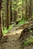 Dense green forest Stock Photography