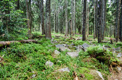 Dense green forest Royalty Free Stock Photos
