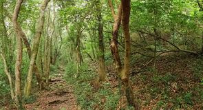 Dense Green Forest with a Rugged Trail Stock Photo