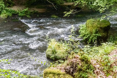 A dense green forest through which a shallow stream of water is seen flowing. A dense green forest with moss covered rocks is seen through which a stream of Royalty Free Stock Photography
