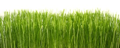 Dense green grass Royalty Free Stock Image