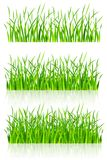 Dense green grass. Illustration isolated on white background Stock Photography