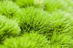 Dense green plants Stock Photos