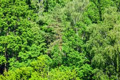 Dense greenwood in sunny summer day. Above view of dense greenwood in sunny summer day stock photography