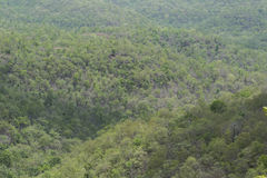 Dense Indian Forest Royalty Free Stock Images