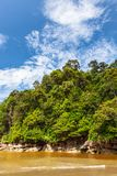 Dense jungle and blue sky Royalty Free Stock Photography