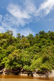 Dense jungle and blue sky Royalty Free Stock Photos