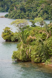 Dense jungle by lake Royalty Free Stock Photos
