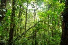 Dense jungle with many trees Stock Image