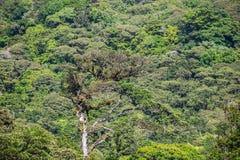 Dense jungle with many trees Royalty Free Stock Photos